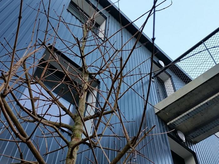 92 logements BBC : détail façade nord